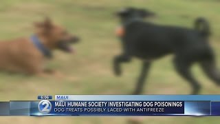 Maui Humane Society investigates dog poisoning cases in Makawao