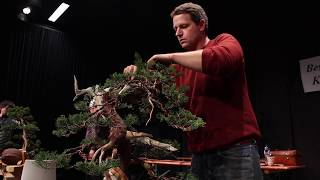 Juniper bonsai demo by Ryan Neil