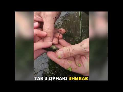 UA: БУКОВИНА: Сьогодні у Чернівцях пройде марш за права тварин