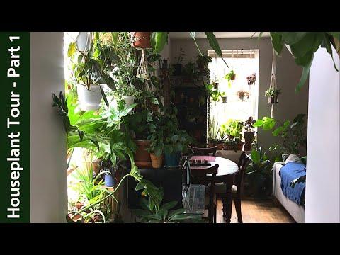 Houseplant Tour (350+ Plants) | Summer 2019 | Part 1 - Kitchen/Living Room