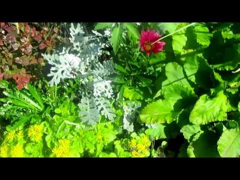 видео: Пью кофе, гуляю по саду!