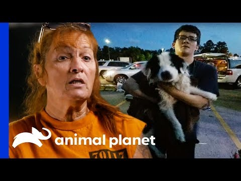 A Miracle Dog Rescue During Terrible Floods In Louisiana | Pit Bulls & Parolees