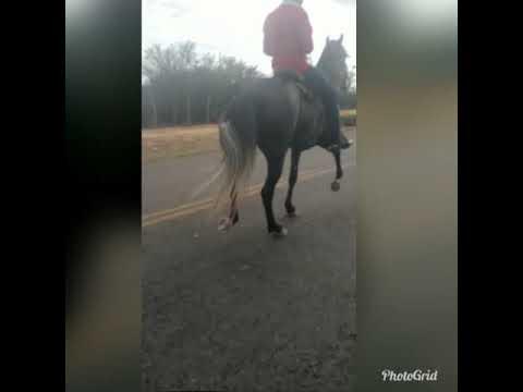 Cavalo  de Picado a venda - Planaltino Bahia