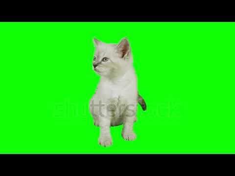 فيديو خلفية كروما خضراء للمونتاج Green Screen F Youtube