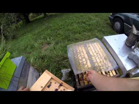 Bienenvölker einfüttern