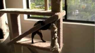 Rascador y Torre de Juegos para Gatos - HD