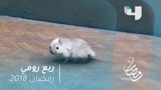 ربع رومي - بعد تحول بيومي فؤاد لفأر .. مطاردة كوميدية بينه وبين قط  #رمضان_يجمعنا