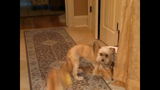 朝からハイテンションな犬とマイペースにごはんを食べる犬