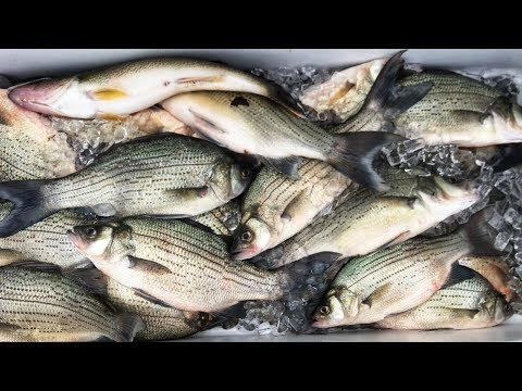 White Bass Fishing Waubay SD - The Hype Is Real!!!!