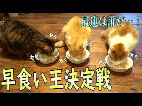 最速の猫は誰だ!早食い王決定戦でまさかの展開に…!?