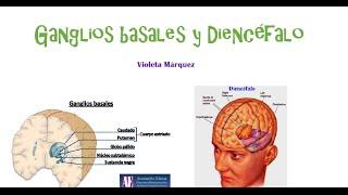 Conceptos básicos 7: ganglios basales y diencéfalo