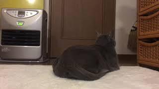 猫の虐待ではないのです thumbnail