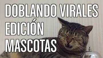 Doblando Virales 15 - Edición Mascotas