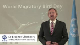 Statement by Dr Bradnee Chambers to mark 2015 World Migratory Bird Day
