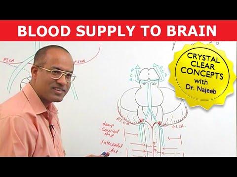 Blood Supply to Brain - Neuroanatomy