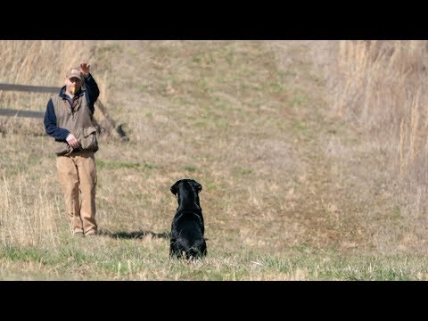 Handling Tips For Retriever Trainers