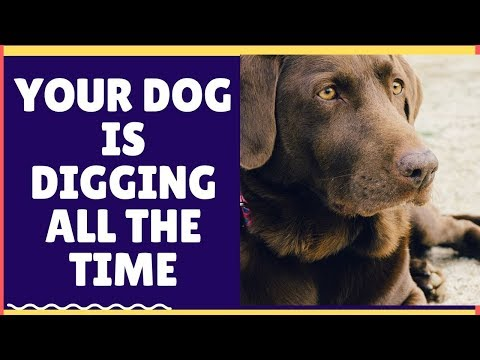 why-your-dog-is-digging-all-the-time