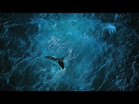 Planet Ocean [UK]- the film by Yann Arthus-Bertrand & Michae