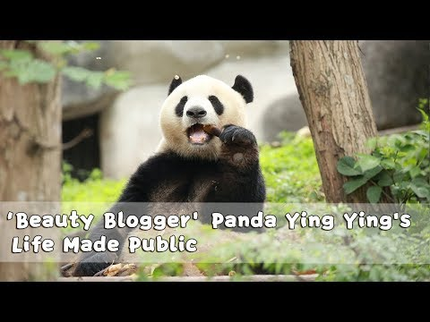 'Beauty Blogger' Panda Ying Ying's Life Made Public | iPanda
