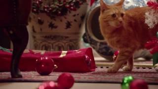 Рождество, коты и рок-н-ролл!