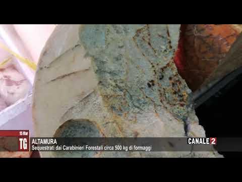 TG CANALE 2_ALTAMURA: SEQUESTRATI DAI CARABINIERI FORESTALI CIRCA 500 KG DI FORMAGGI