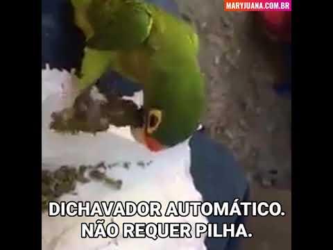 Papagaio dichavador