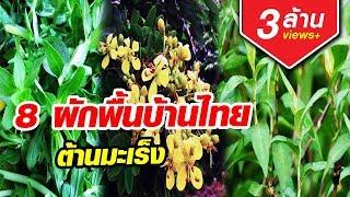มะเร็งยังกลัว 8ผักพื้นบ้านไทย ต้านมะเร็ง หามากินด่วน| Aranya Channel
