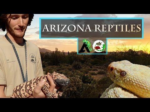 Reptiles of Arizona - Phoenix Herpetological Society