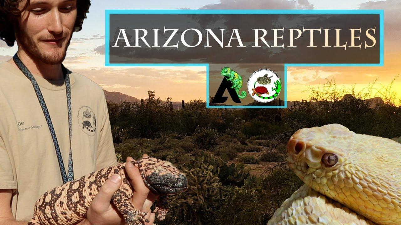 Best Reptile Incubator