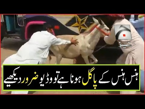 Latest Tezabi Totay Compilation Funny Video Clips Punjabi Dubbing Geo TEZ