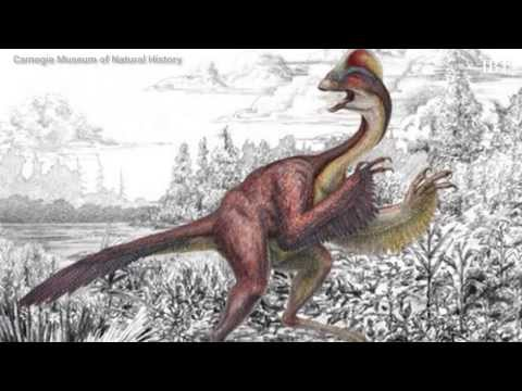 'Chicken From Hell' Dinosaur Officially Enters Science Community