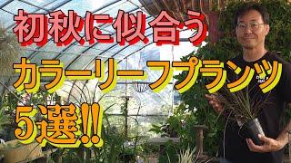 [ガーデニング] 秋のカラーリーフプランツ5選「これからの季節にぴったりの植物をプロガーデナーがご紹介」