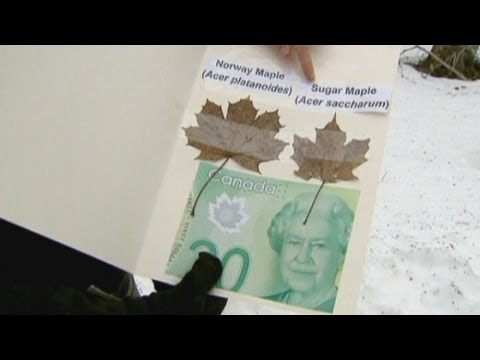 Canadian Botanists Upset By New Banknote