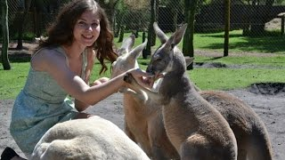 КЕНГУРУ!!!  ТО ЛИ КРОЛИК ТО ЛИ ЛОШАДЬ, А ЕСТ КАК СОБАКА   Feeding kangaroo Australia