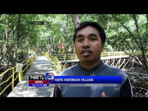 Menikmati Hijaunya Hutan Mangrove Bontang - NET5