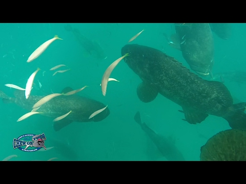 Wow Amazing Fishing Offshore - Incredible Deep Hole Florida Fishing - Goliath Grouper Party