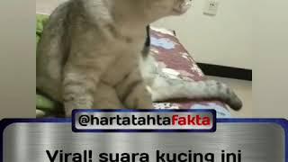 Suara Kucing Ini Membuat Kucing Dan Anjing Bingung