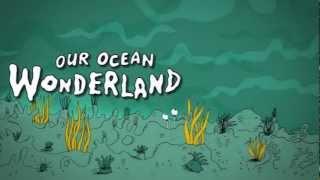 Our Ocean Wonderland the Batfish