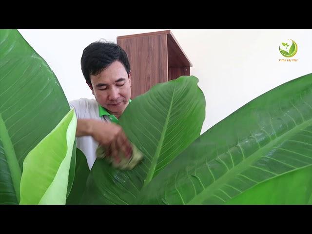 Dịch vụ cho thuê cây cảnh uy tín, chất lượng tại Vườn Cây Việt