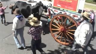 Costa Mesa Cattle Drive 2015