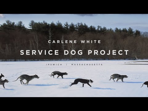 Service Dog Project