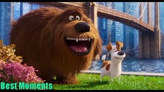 The Secret Life of Pets | Best Memorable Funny Moments| Cartoons for kids
