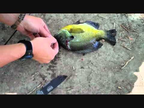 Survival fishing yo yo trap attempt and failure youtube for Yo yo fishing