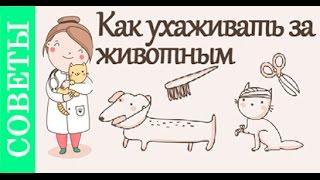 Как ухаживать за животными. Советы ветеринара(, 2016-02-11T16:29:09.000Z)