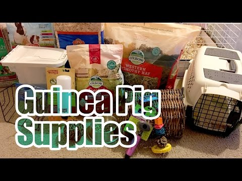 Basic Supplies You Need For A Guinea Pig