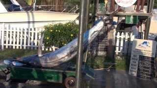 Blue Marlin Mauritius
