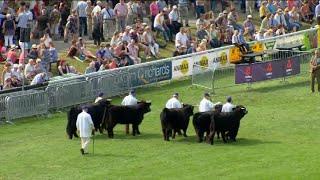 Tîm o 5 Biff - Rh. 2 | Beef Team of 5 pt. 2