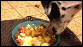 Dalmatian Dogs Eating New Years Day Dinner