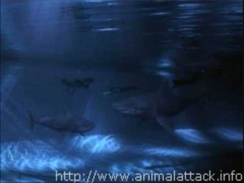 Movie Stills From Shark Attack (1999) | Doovi