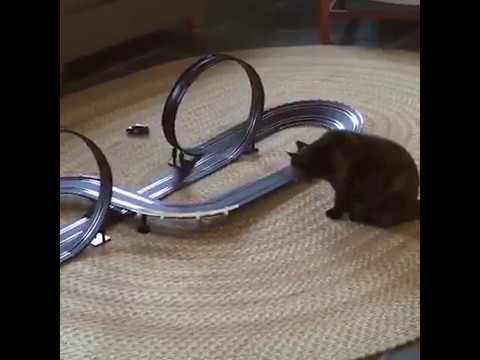 😂 Don't try to #laugh #challenge | #pets scarred by toys | #funny cats